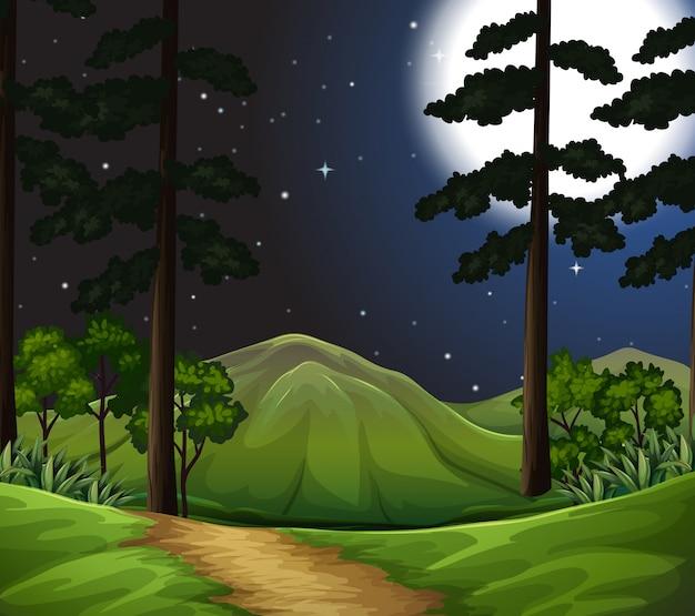 Woods w nocy sceny