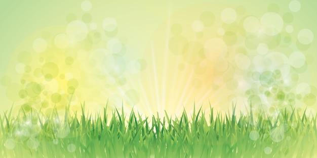 Wróżka trawa tło