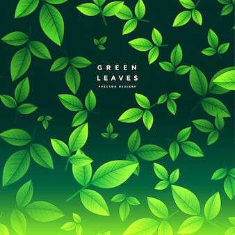 Wspaniała zielona herbata opuszcza tło