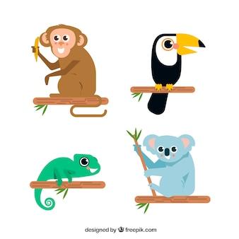 Wspaniały zestaw egzotycznych zwierząt