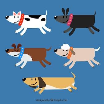 Wybór pięciu psów geometrycznych w płaskim kształcie