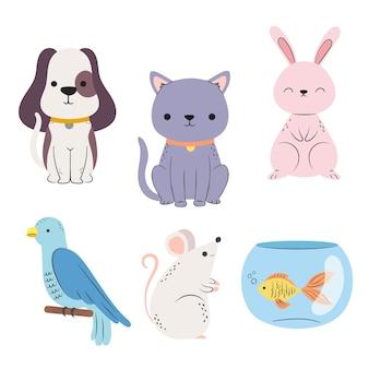 Wybór różnych zwierząt domowych