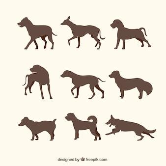 Wybór wielkich psów sylwetki