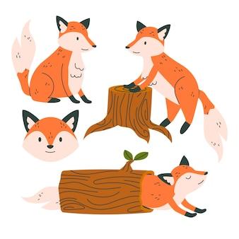 Wyciągnięta kolekcja fox