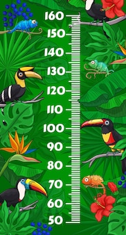 Wykres wzrostu dzieci z rysunkowymi ptakami tukan i kameleonami w tropikalnych liściach dżungli. miara wzrostu miernik ścienny z centymetrową podziałką na tle egzotycznych zwierząt, jaszczurek i kwiatów