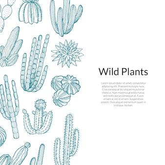 Wzór kaktusa. ręcznie rysowane dzikie kaktusy