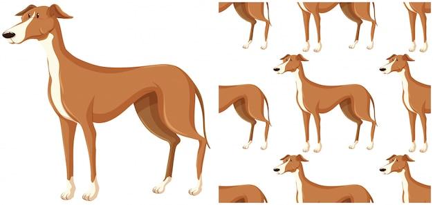 Wzór psa na białym tle