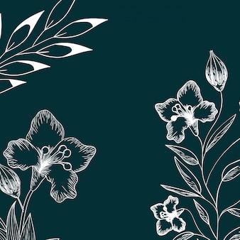 Wzór rośliny i zioła na białym tle ikona