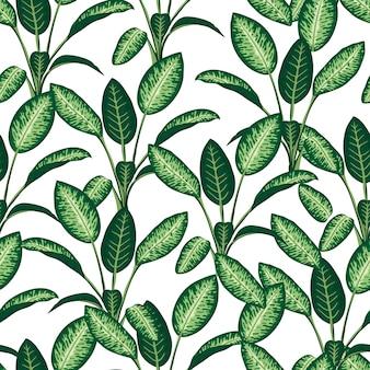Wzór tropikalnych roślin. powtórz tropikalne tło z gałęziami dieffenbachii. tapeta egzotycznej dżungli