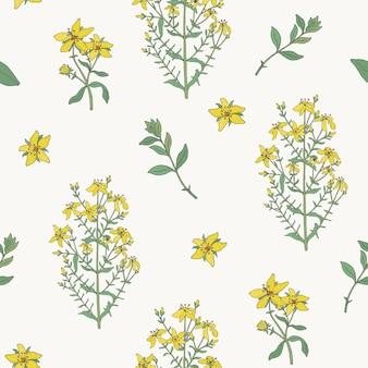 Wzór z kwiatami dziurawca zwyczajnego