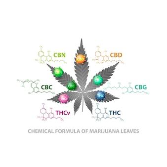 Wzory chemiczne naturalnych kannabinoidów. liść konopi z cząsteczkami 3d