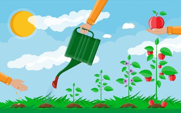 Wzrost rośliny, od kiełków do owoców.