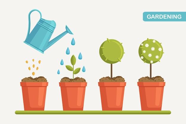 Wzrost rośliny w doniczce, od kiełka do kwitnienia. sadzenie drzew. sadzonka ogrodnicza. oś czasu