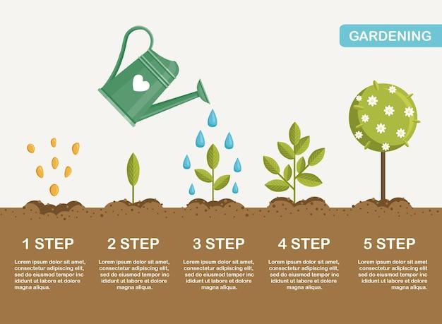 Wzrost rośliny w gruncie, od kiełka do kwitnienia. sadzenie drzew. sadzonka ogrodnicza. oś czasu