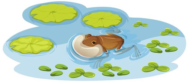 Żaba na liściu lotosu w wodzie