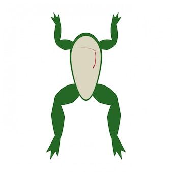 Żaba otwarta do eksperymentu