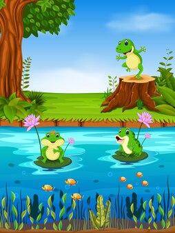 Żaba pływanie w rzece