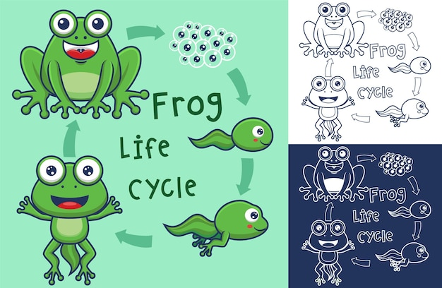 Zabawna kreskówka cyklu życia żaby