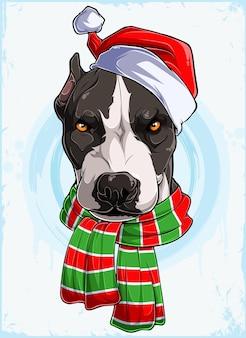Zabawna poważna głowa psa świątecznego pitbull z czapką świętego mikołaja i szalikiem xmas pitbull dog