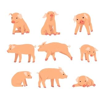 Zabawna świnka w różnych działaniach zestaw ilustracji kreskówek