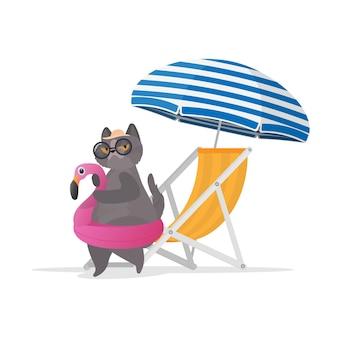 Zabawny kot z gumowym pierścieniem w kształcie różowego flaminga. leżak, parasol.