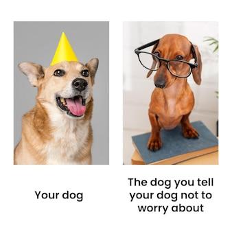 Zabawny zazdrosny pies mem