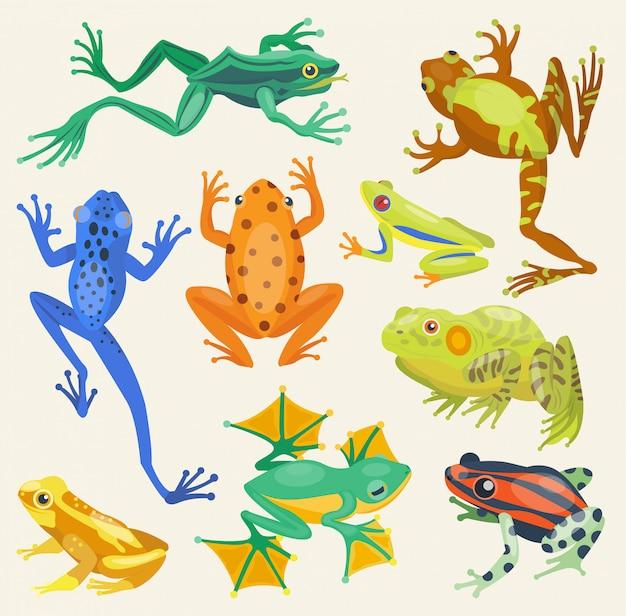 Żaby kreskówki tropikalnych zwierząt ilustracyjna odosobniona natura