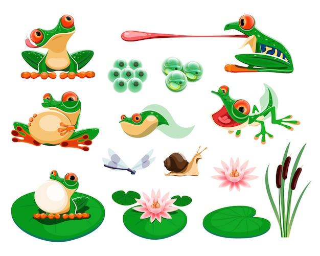 Żaby z liśćmi i kwiatami lilii wodnej, trzcina, ważka, ślimak
