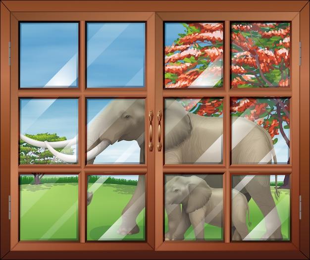 Zamknięte okno z widokiem dwóch słoni na zewnątrz