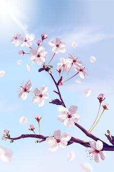 Zapierające dech w piersiach kwiaty wiśni ciągnące się ku niebu