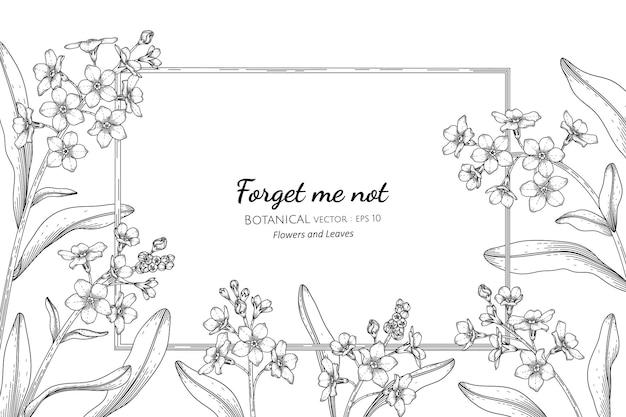 Zapomnij o mnie nie kwiat i liść ręcznie rysowane ilustracja botaniczna z grafiką liniową.