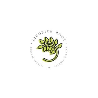Zaprojektuj szablon logo i godło zdrowej ziołowej lukrecji. logo w modny styl liniowy na białym tle.