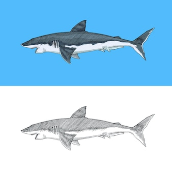 Żarłacz biały lub makrela rekin morski drapieżne zwierzę morskie życie ręcznie rysowane vintage grawerowane