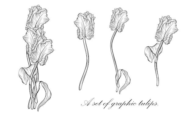 Zarys tulipana. linia sztuki ręcznie rysowane kwiaty. wektor tulipany. ilustracja kwiatowy
