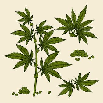 Zbiór botanicznych liści i nasion konopi