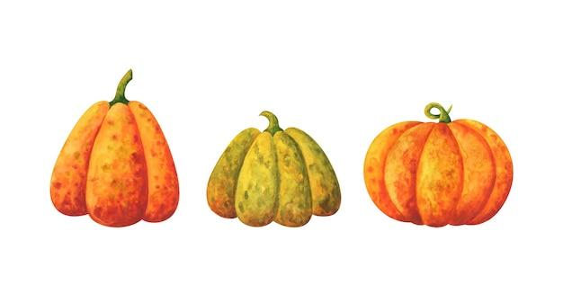 Zbiór dojrzałych dyń. zestaw ilustracji z jesiennych warzyw