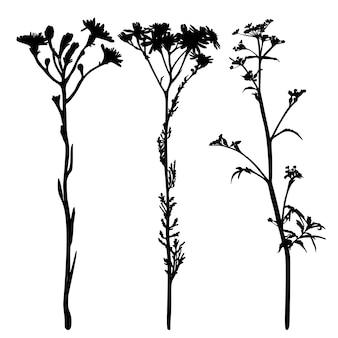 Zbiór dzikich kwiatów sylwetki na białym tle.