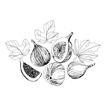 Zbiór fig owoców zarys ilustracji. wektor pojedyncze czarno-białe pokrojone owoce.