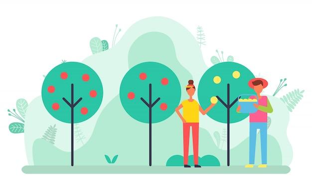 Zbiór i rolnictwo, rolnictwo w ogrodzie