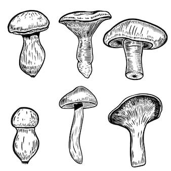 Zbiór ilustracji grzyby wyciągnąć rękę na białym tle. elementy plakatu, godła, znaku, etykiety, menu. ilustracja