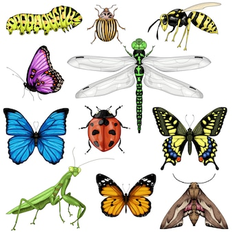 Zbiór ilustracji owadów na białym tle.