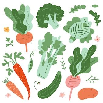 Zbiór ilustracji warzyw