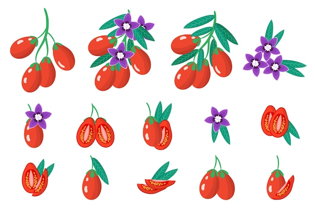 Zbiór ilustracji z egzotycznych owoców goji, kwiatów i liści na białym tle