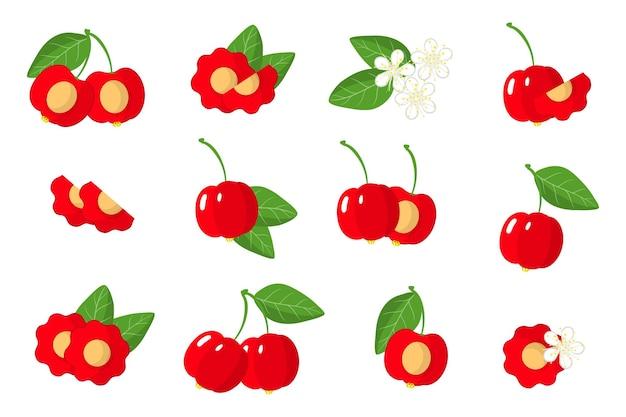 Zbiór ilustracji z egzotycznych owoców, kwiatów i liści pitanga na białym tle