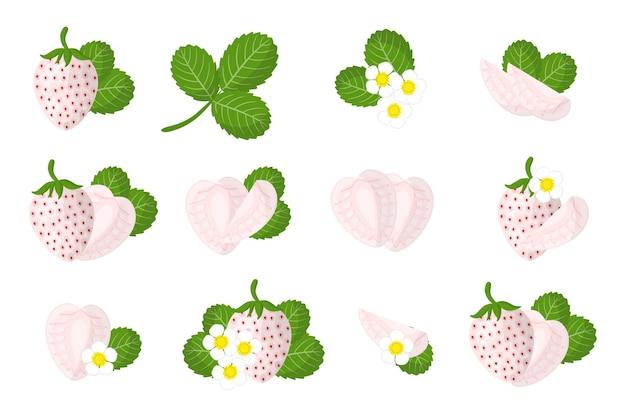 Zbiór ilustracji z egzotycznych owoców pineberry, kwiatów i liści na białym tle