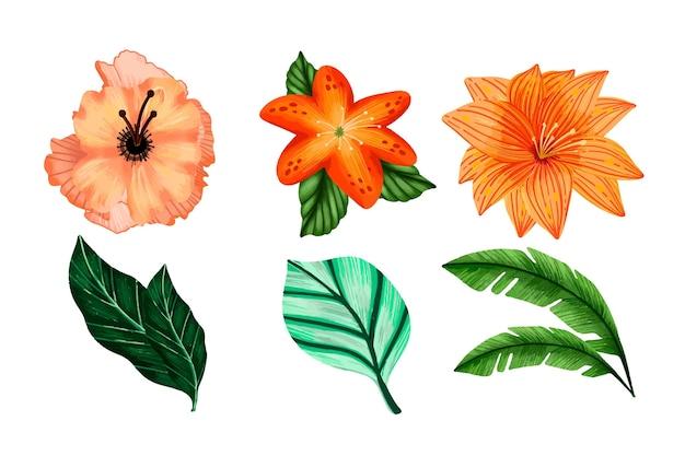 Zbiór kwiatów i liści tropikalnych