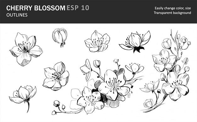 Zbiór kwiatów sakury. sakura gałąź z kwiatami.