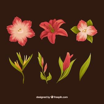 Zbiór kwiatów wyciągnąć rękę