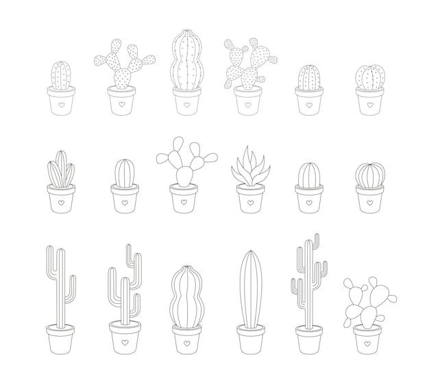 Zbiór liniowych kaktusów wektorowych