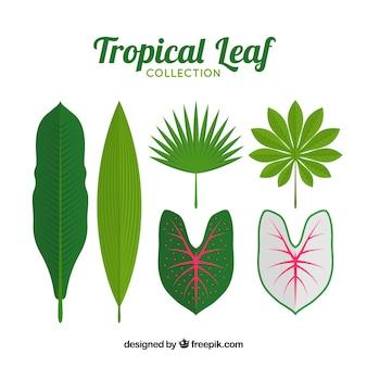 Zbiór liści tropikalnych roślin
